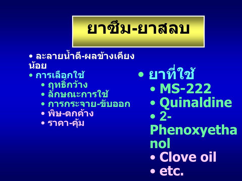 ยาซึม-ยาสลบ ยาที่ใช้ MS-222 Quinaldine 2-Phenoxyethanol Clove oil etc.