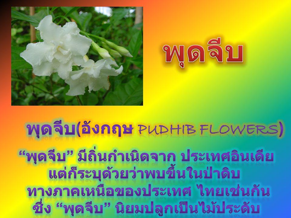พุดจีบ พุดจีบ (อังกฤษ Pudhib flowers)