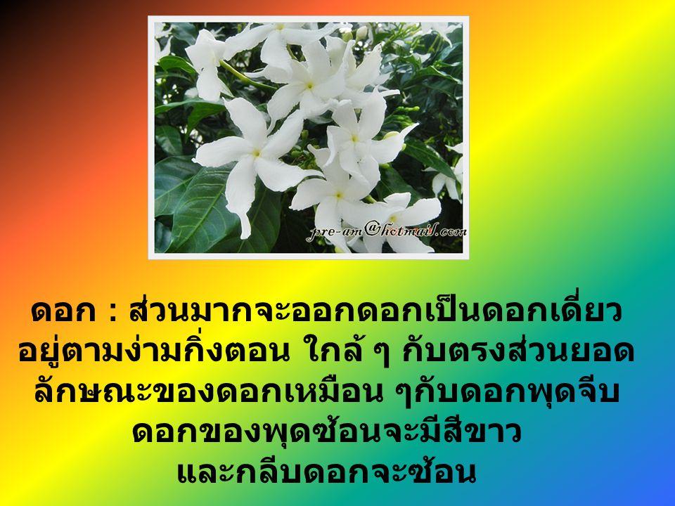 ดอก : ส่วนมากจะออกดอกเป็นดอกเดี่ยว