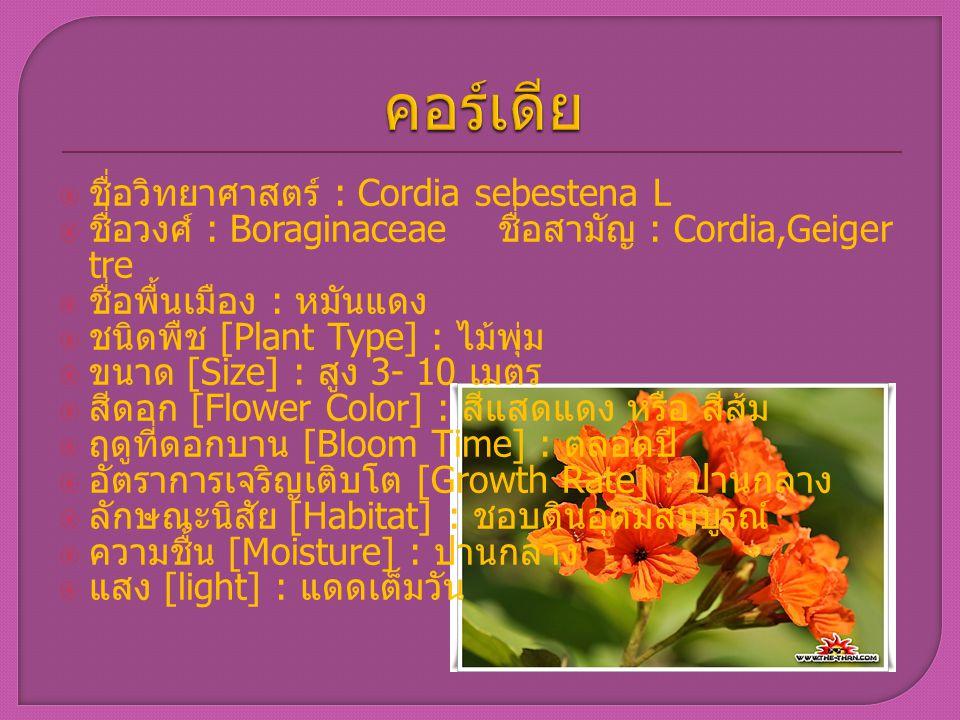 คอร์เดีย ชื่อวิทยาศาสตร์ : Cordia sebestena L