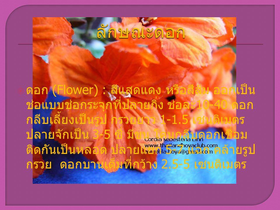 ลักษณะดอก