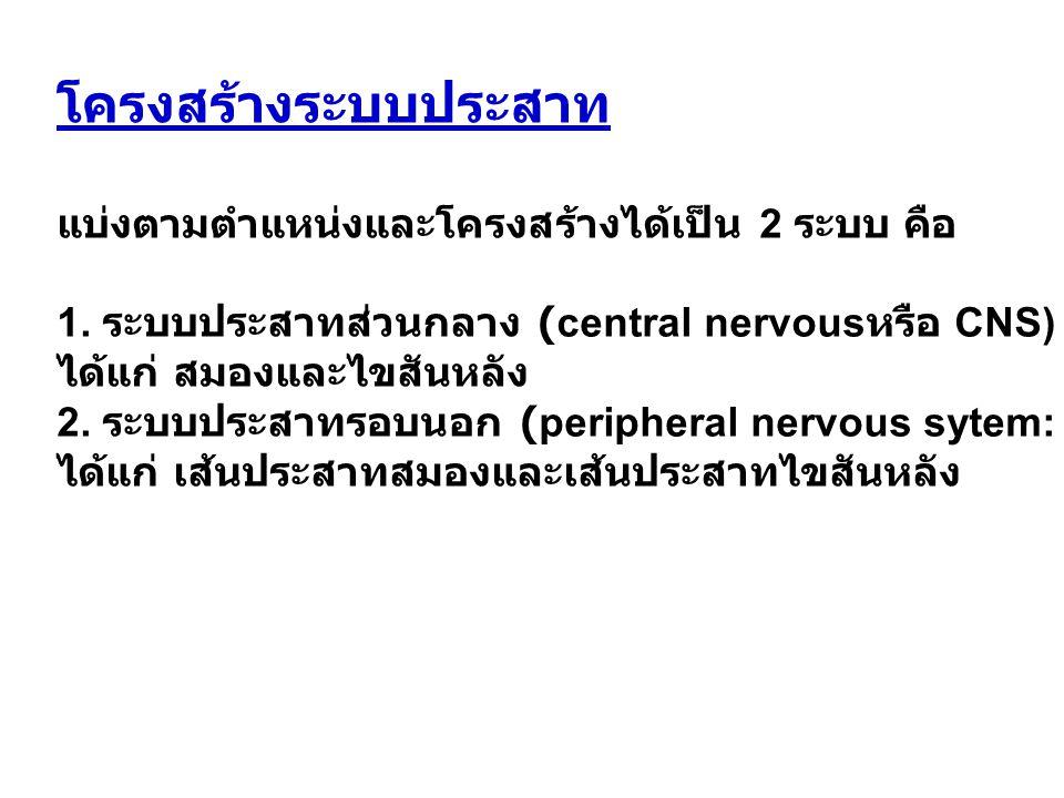 โครงสร้างระบบประสาท