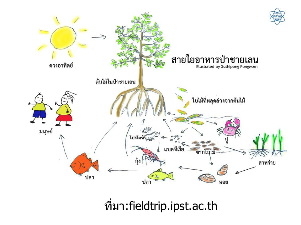 ที่มา:fieldtrip.ipst.ac.th
