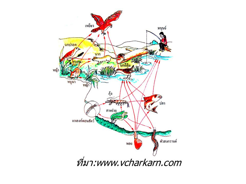ที่มา:www.vcharkarn.com