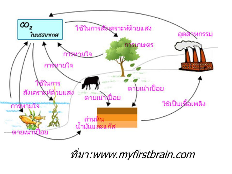 ที่มา:www.myfirstbrain.com