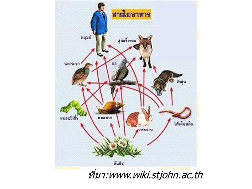 ที่มา:www.wiki.stjohn.ac.th
