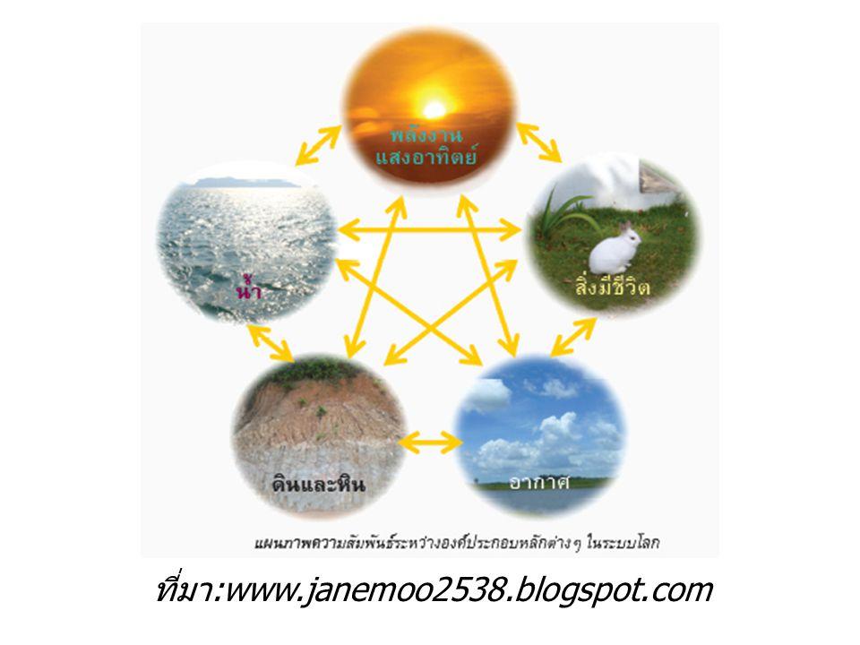 ที่มา:www.janemoo2538.blogspot.com