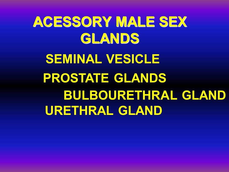 ACESSORY MALE SEX GLANDS