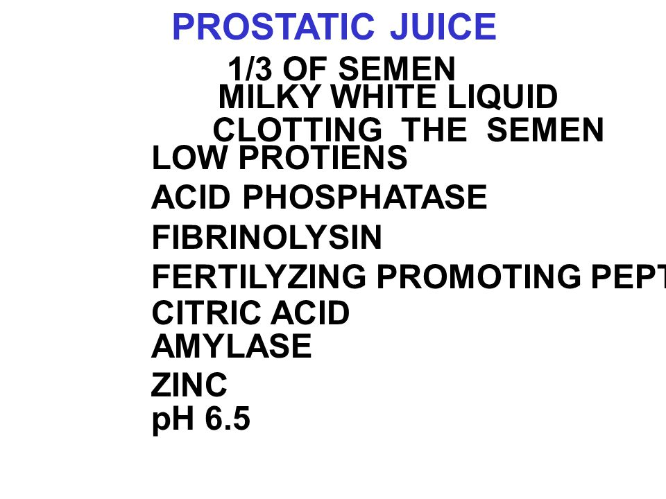 PROSTATIC JUICE 1/3 OF SEMEN MILKY WHITE LIQUID CLOTTING THE SEMEN