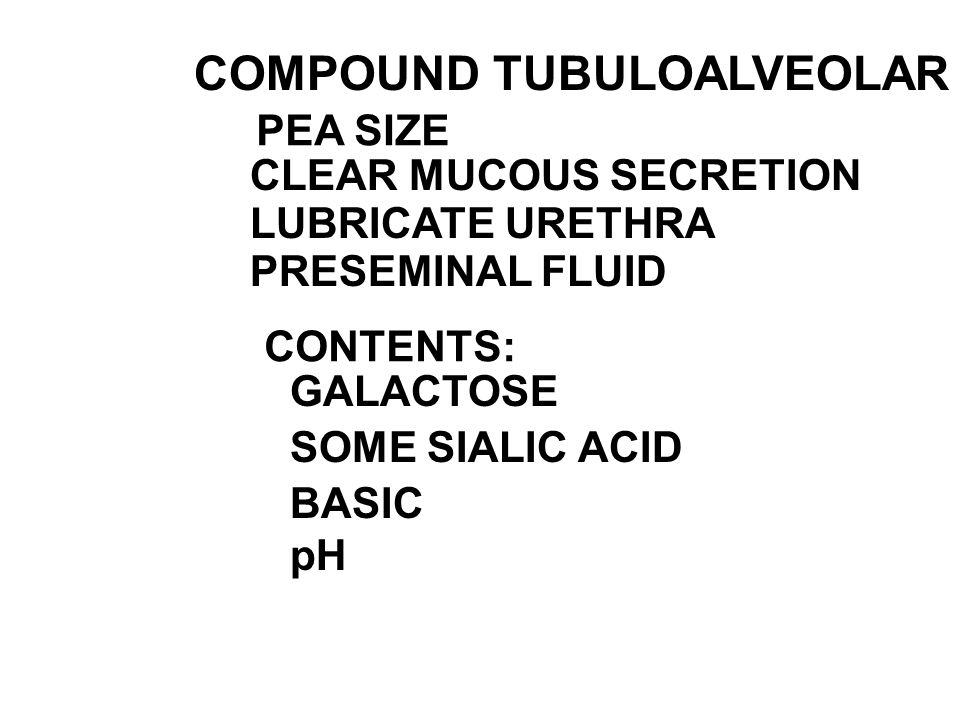 COMPOUND TUBULOALVEOLAR GLAND