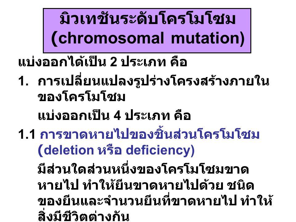 มิวเทชันระดับโครโมโซม (chromosomal mutation)