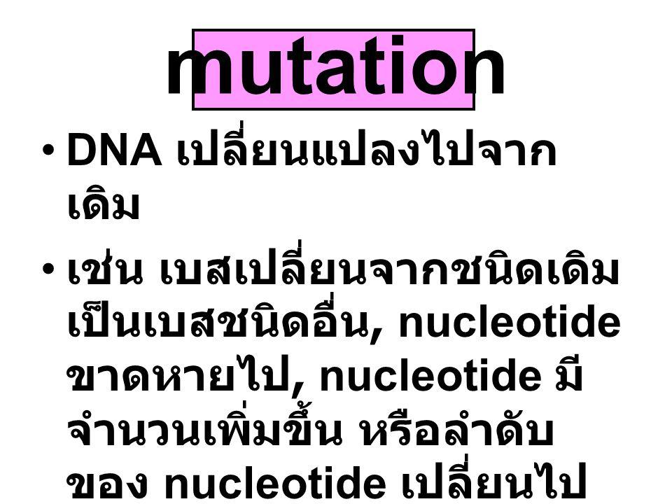 mutation DNA เปลี่ยนแปลงไปจากเดิม