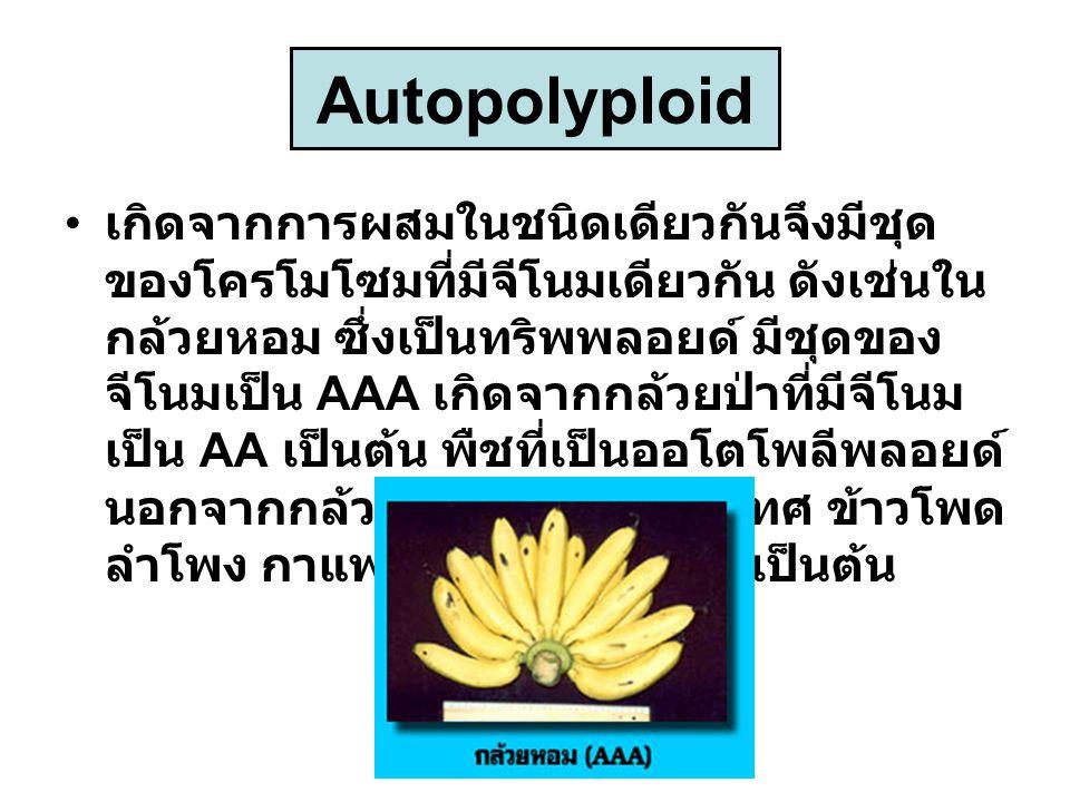 Autopolyploid