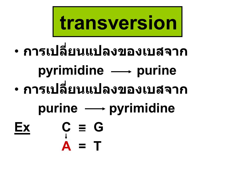 transversion การเปลี่ยนแปลงของเบสจาก pyrimidine purine