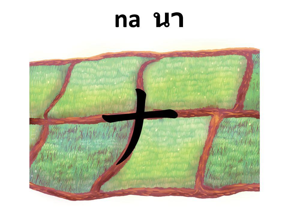 na นา