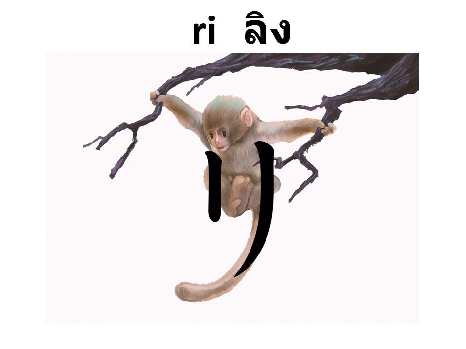 ri ลิง