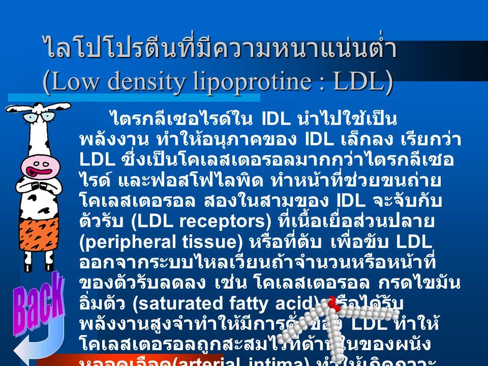 ไลโปโปรตีนที่มีความหนาแน่นต่ำ (Low density lipoprotine : LDL)