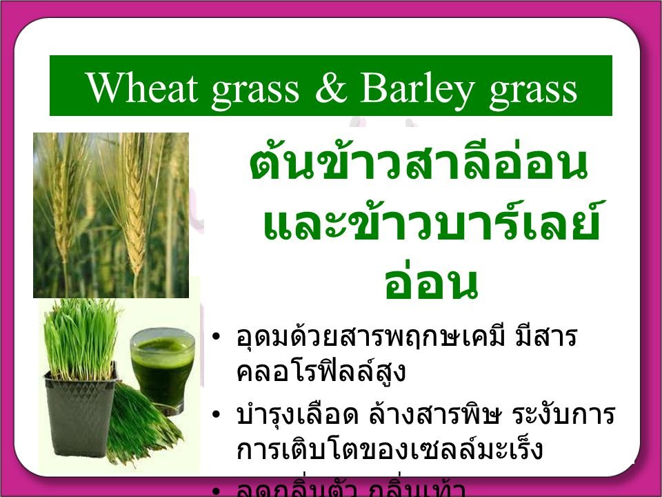 Wheat grass & Barley grass
