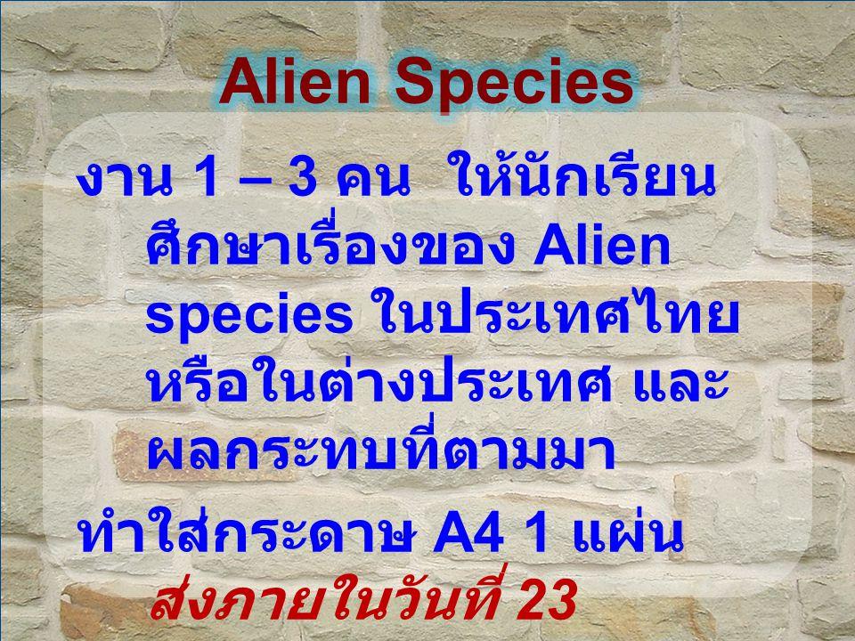 Alien Species งาน 1 – 3 คน ให้นักเรียน ศึกษาเรื่องของ Alien species ในประเทศไทย หรือในต่างประเทศ และผลกระทบที่ตามมา.
