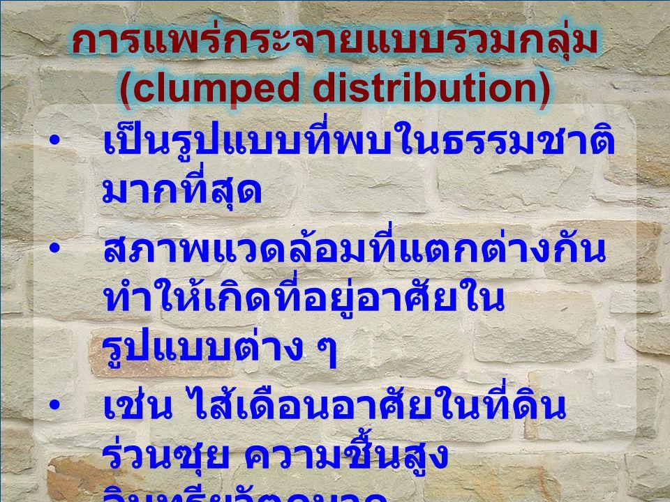 การแพร่กระจายแบบรวมกลุ่ม (clumped distribution)