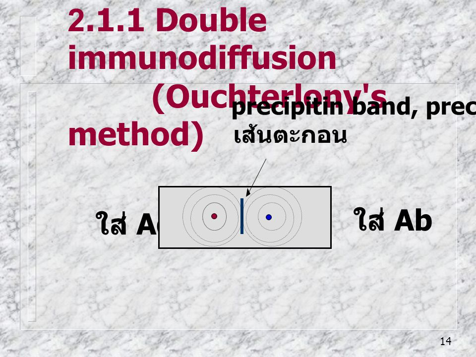 2.1.1 Double immunodiffusion (Ouchterlony s method)