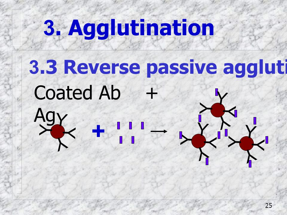 + 3. Agglutination 3.3 Reverse passive agglutination (หา Ag)