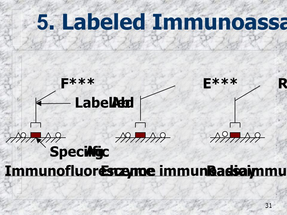 5. Labeled Immunoassay F*** E*** R*** Labelled Ab Speciific Ag