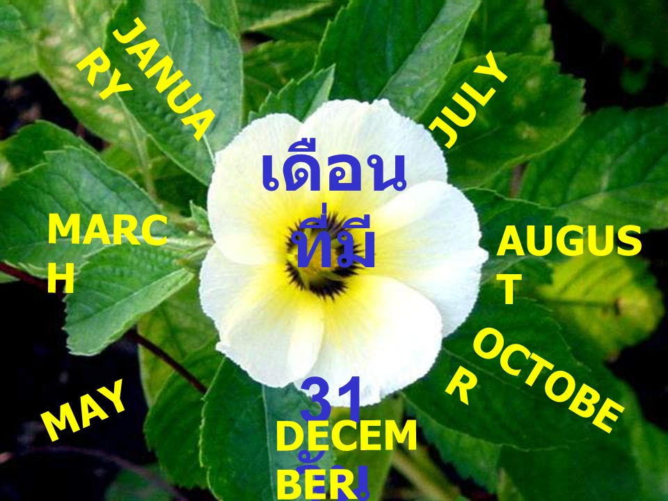 JULY JANUARY เดือนที่มี 31 วัน MARCH AUGUST OCTOBER MAY DECEMBER