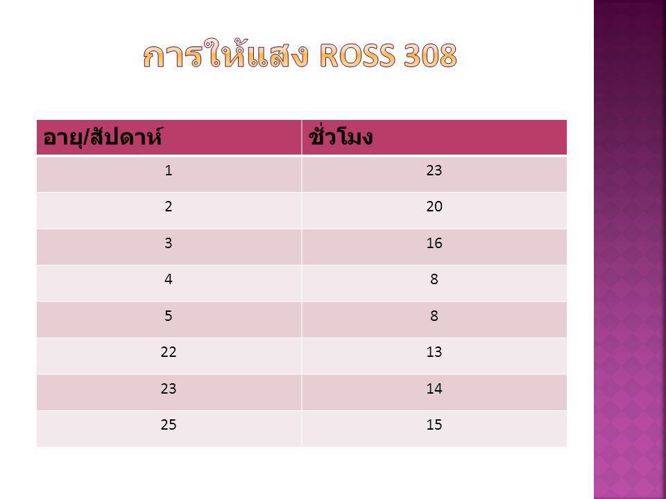 การให้แสง ROsS 308 อายุ/สัปดาห์ ชั่วโมง 1 23 2 20 3 16 4 8 5 22 13 14