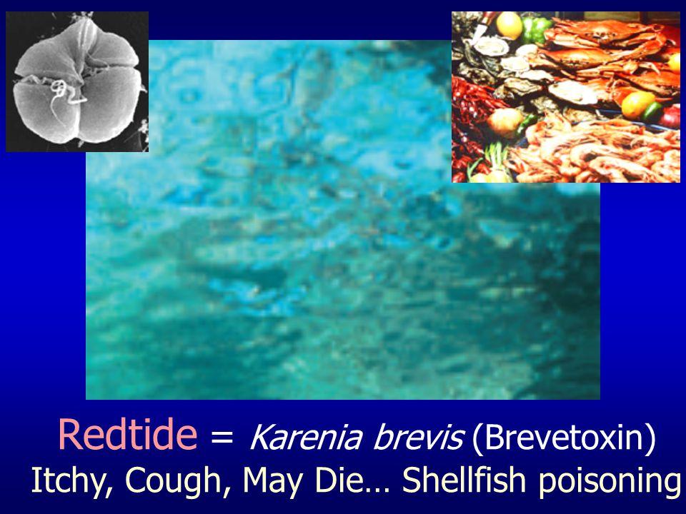 Redtide = Karenia brevis (Brevetoxin)