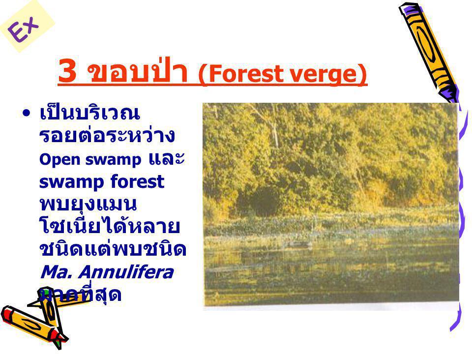 3 ขอบป่า (Forest verge) Ex