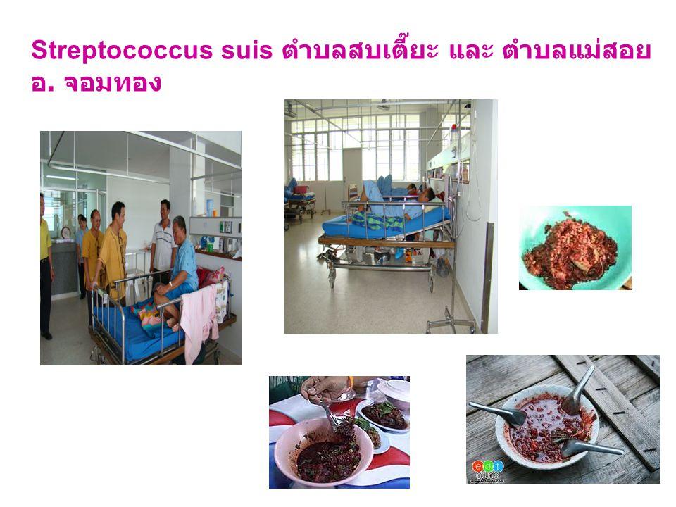 Streptococcus suis ตำบลสบเตี๊ยะ และ ตำบลแม่สอย