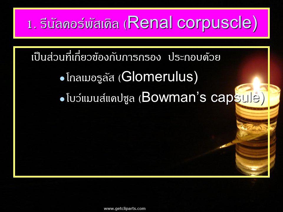 1. รีนัลคอร์พัสเคิล (Renal corpuscle)