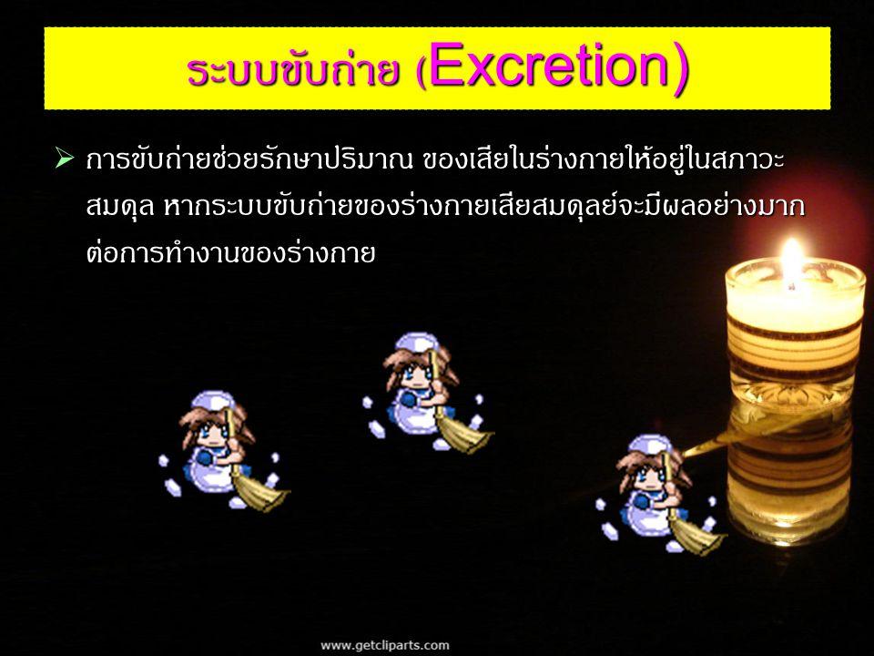ระบบขับถ่าย (Excretion)