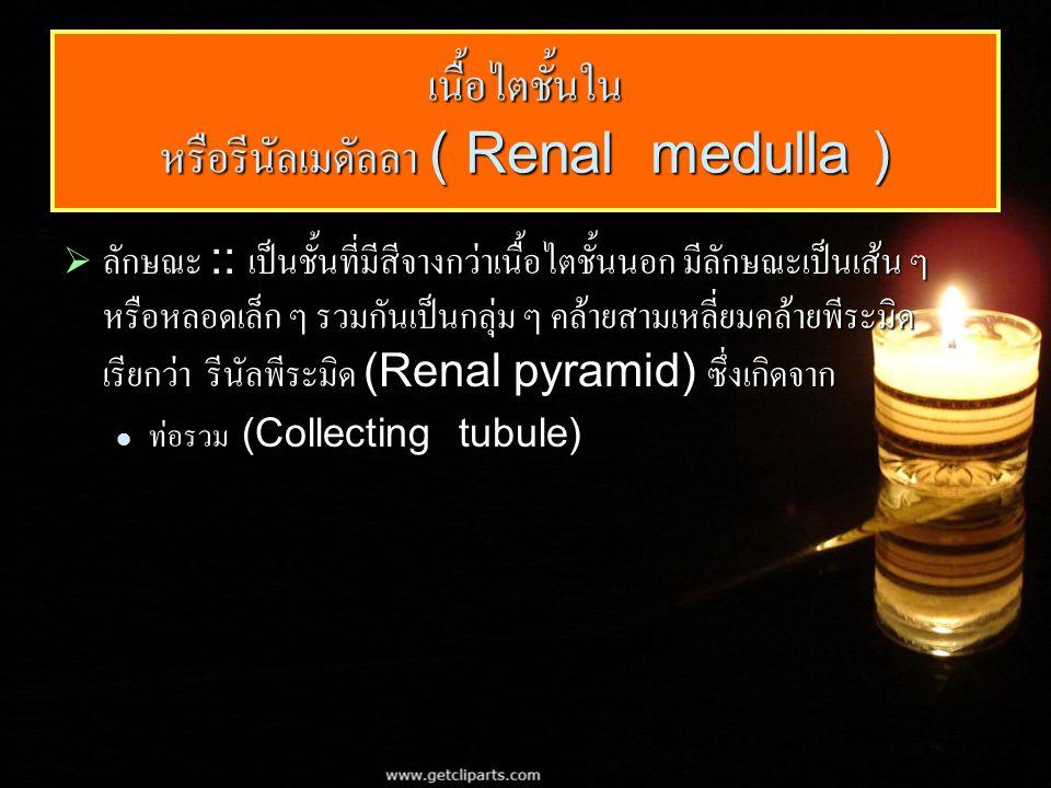 เนื้อไตชั้นใน หรือรีนัลเมดัลลา ( Renal medulla )