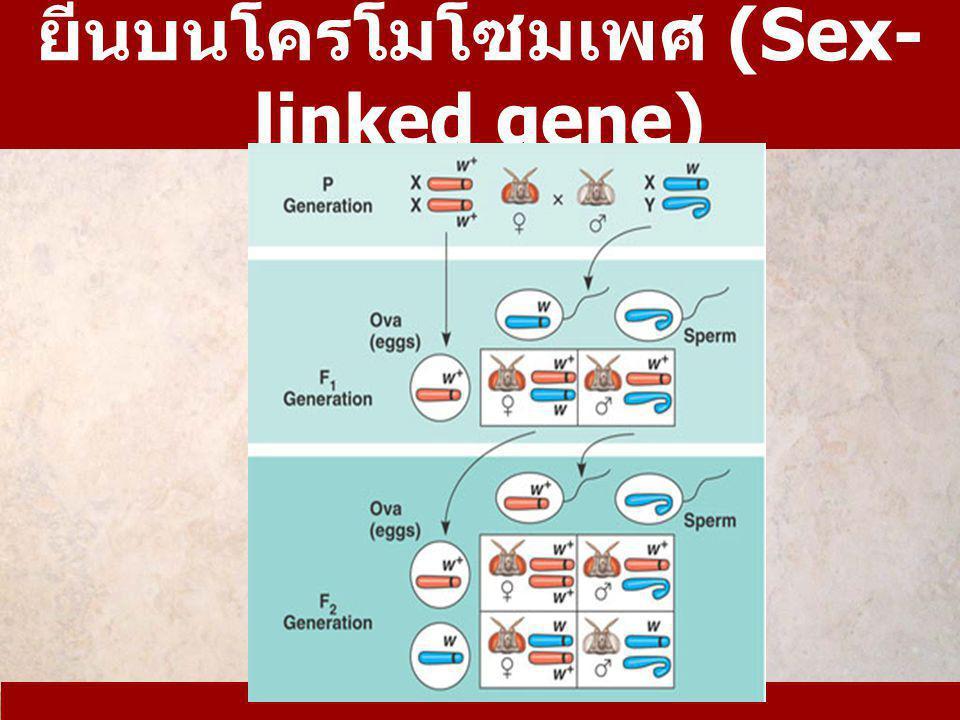 ยีนบนโครโมโซมเพศ (Sex-linked gene)