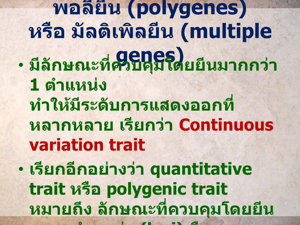 พอลียีน (polygenes) หรือ มัลติเพิลยีน (multiple genes)