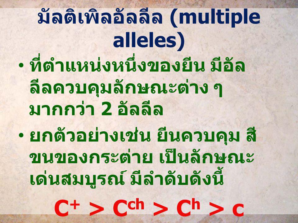 มัลติเพิลอัลลีล (multiple alleles)