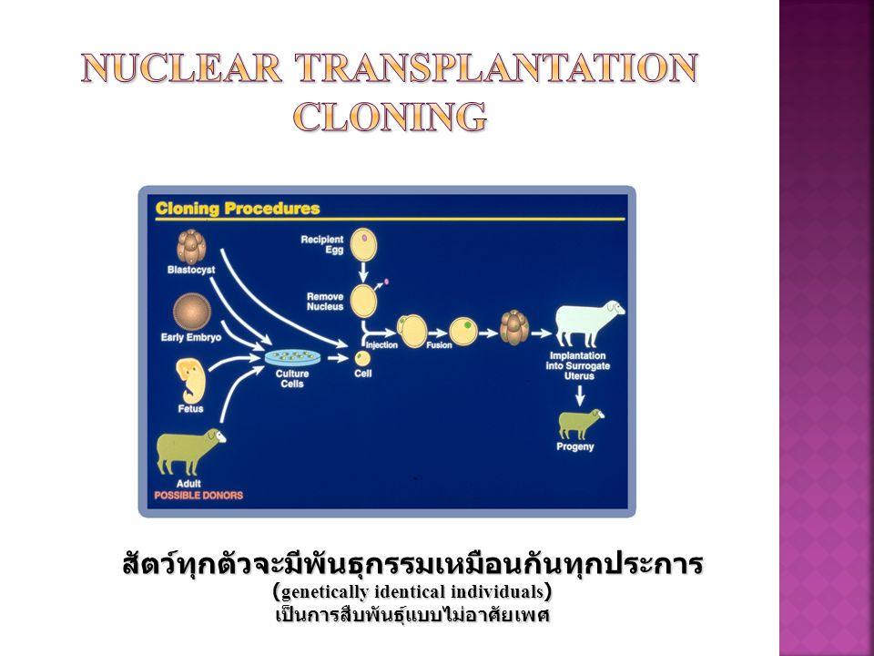 Nuclear transplantation Cloning