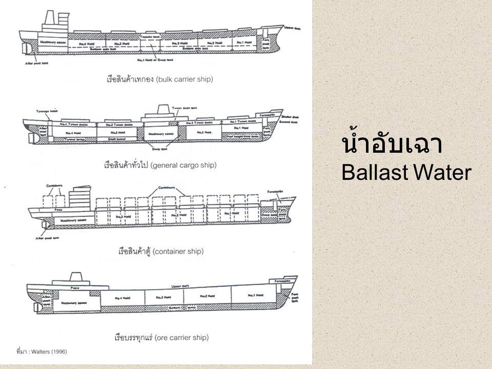 น้ำอับเฉา Ballast Water