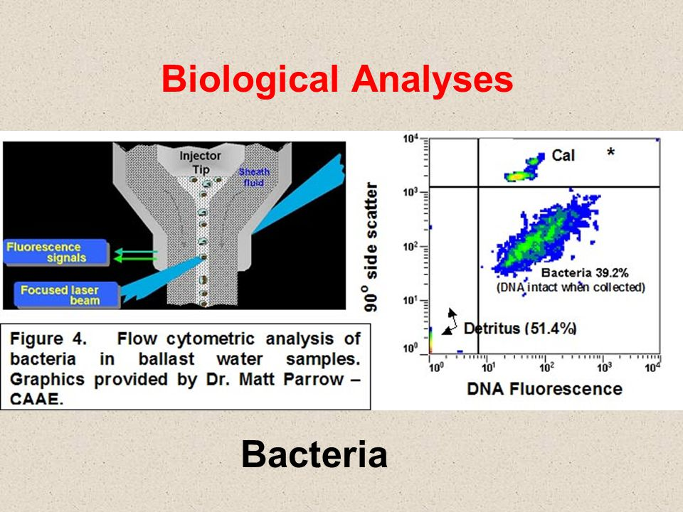 Biological Analyses Bacteria