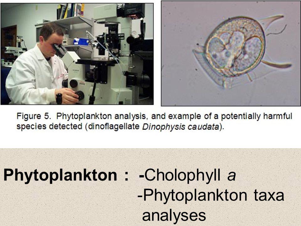 Phytoplankton : -Cholophyll a