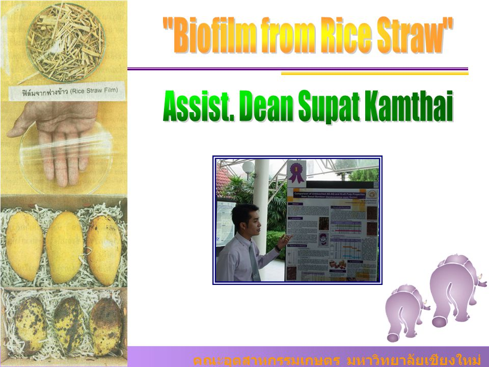 Biofilm from Rice Straw