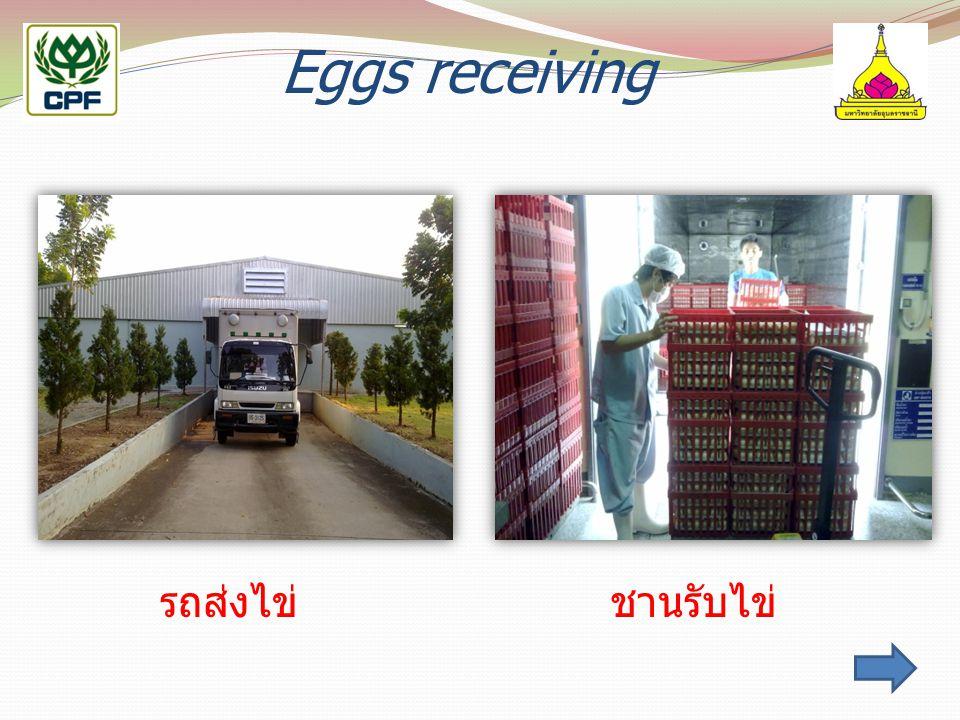 Eggs receiving รถส่งไข่ ชานรับไข่