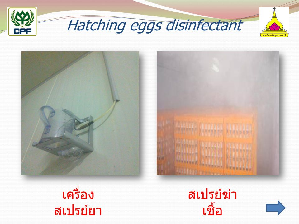 Hatching eggs disinfectant