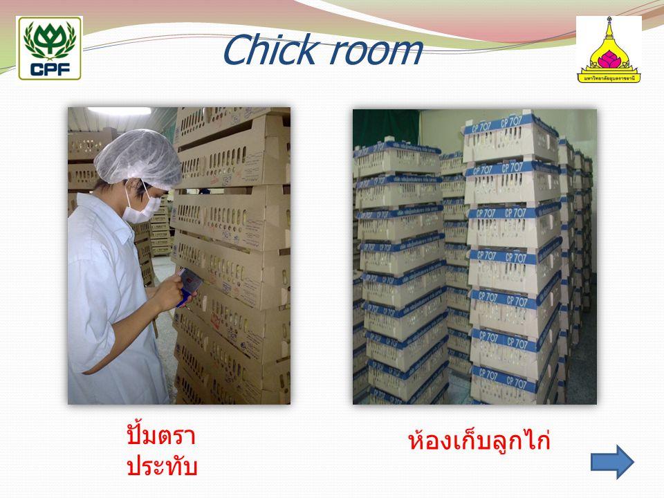 Chick room การจัดเก็บลูกไก่ในห้องจัดเก็บ ปั้มตราประทับ ห้องเก็บลูกไก่