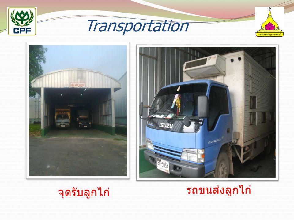 Transportation รถขนส่งลูกไก่ จุดรับลูกไก่
