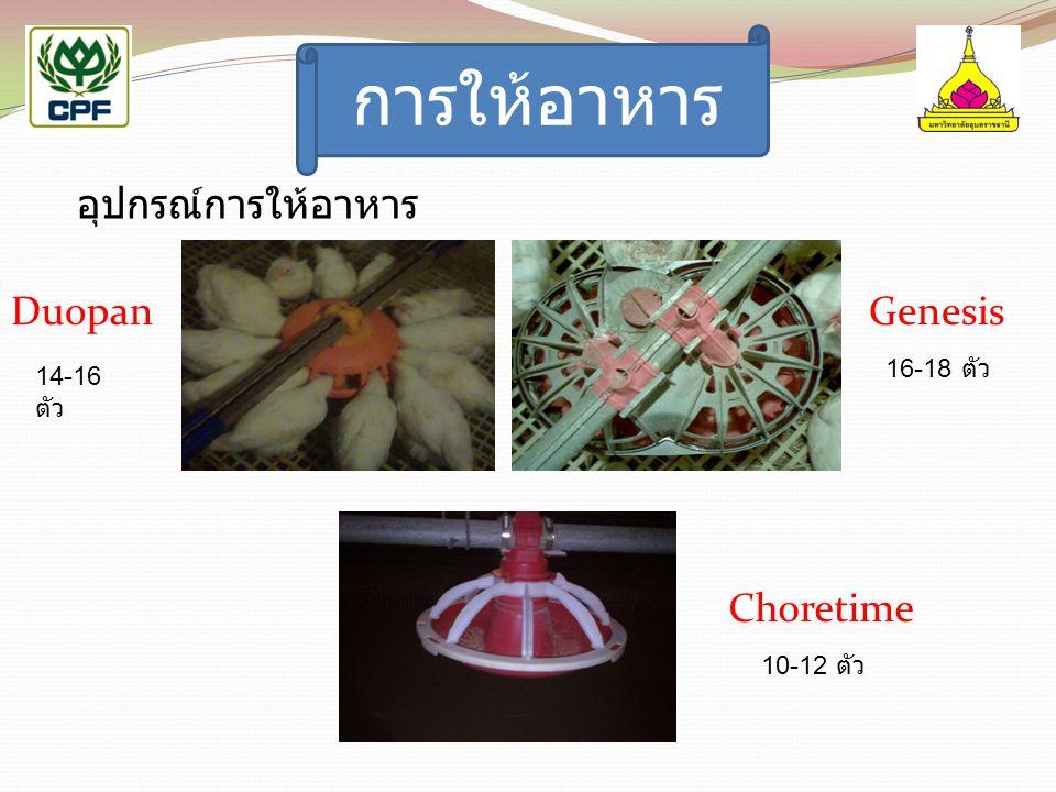 การให้อาหาร อุปกรณ์การให้อาหาร Duopan Genesis Choretime 16-18 ตัว
