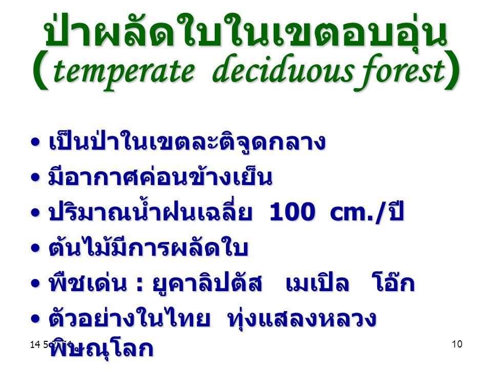 ป่าผลัดใบในเขตอบอุ่น (temperate deciduous forest)