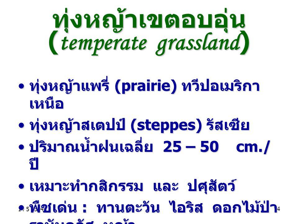 ทุ่งหญ้าเขตอบอุ่น (temperate grassland)